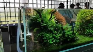 ADA Nature Aquarium Party 2016