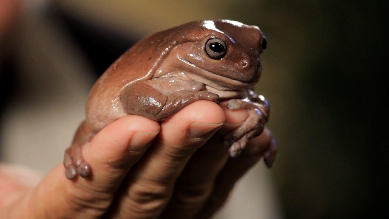Reptiles Pets Australia Tree Frogs | Pet Reptiles