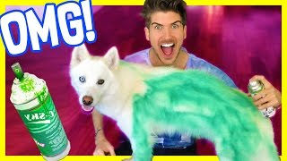 SPRAY PAINTING MY DOG!