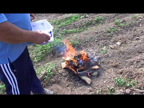Борьба с колорадским жуком биодинамическим методом часть 1   Эконадом www.ekonadom.ru