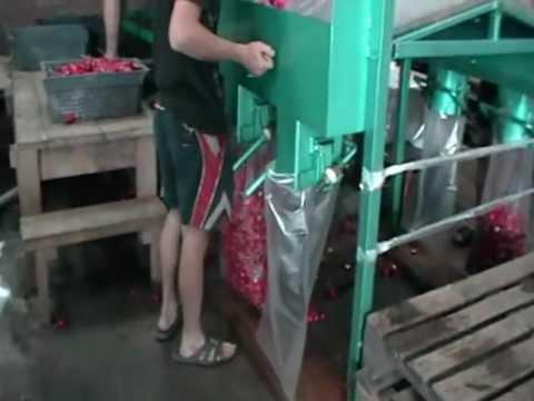Оборудование для выращивания моркови 13