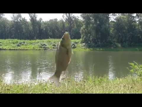 карповая рыбалка видео 2016 днестр глухой турунчук