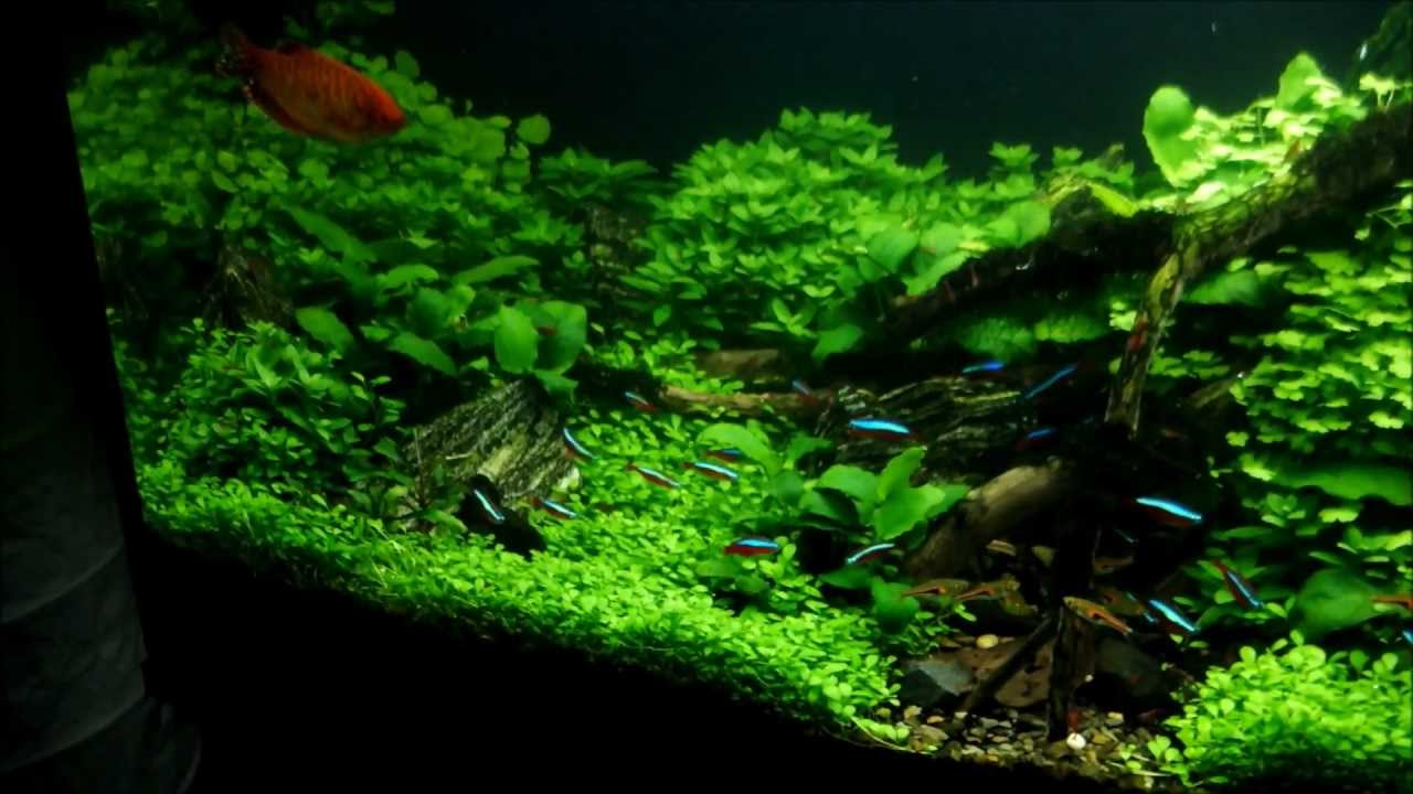 Aquascape Quot I Follow Rivers Quot 80 Tage Update 80 Days Update Aquascaping Hd 1080p Youtube