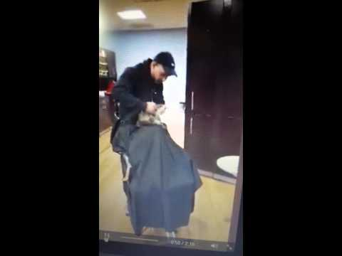 Dog Getting Haircut Dog Gets Haircut at Salon