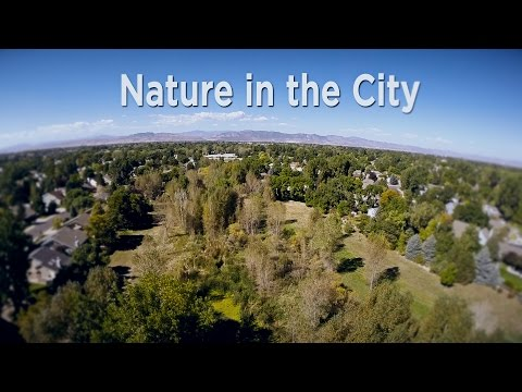 view Out of the Box - Nature in the City video