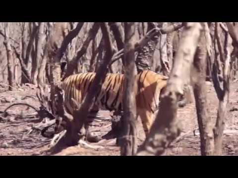 BLOOD OF THE TIGER by J. A. Mills (book trailer)