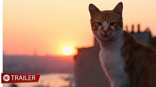 Download Kedi la citt dei gatti  Trailer MP3