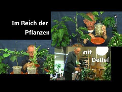 Exotische Pflanzen Erleben Und Pflegen. Entdecke Mit Uns Was Möglich Ist
