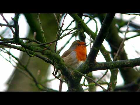 Digiscoping, recording video with the Olivon T84-EDO and Praktica Luxmedia 12-HD