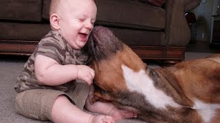 Cute Cats and Dogs Meeting Babies Compilation 2014