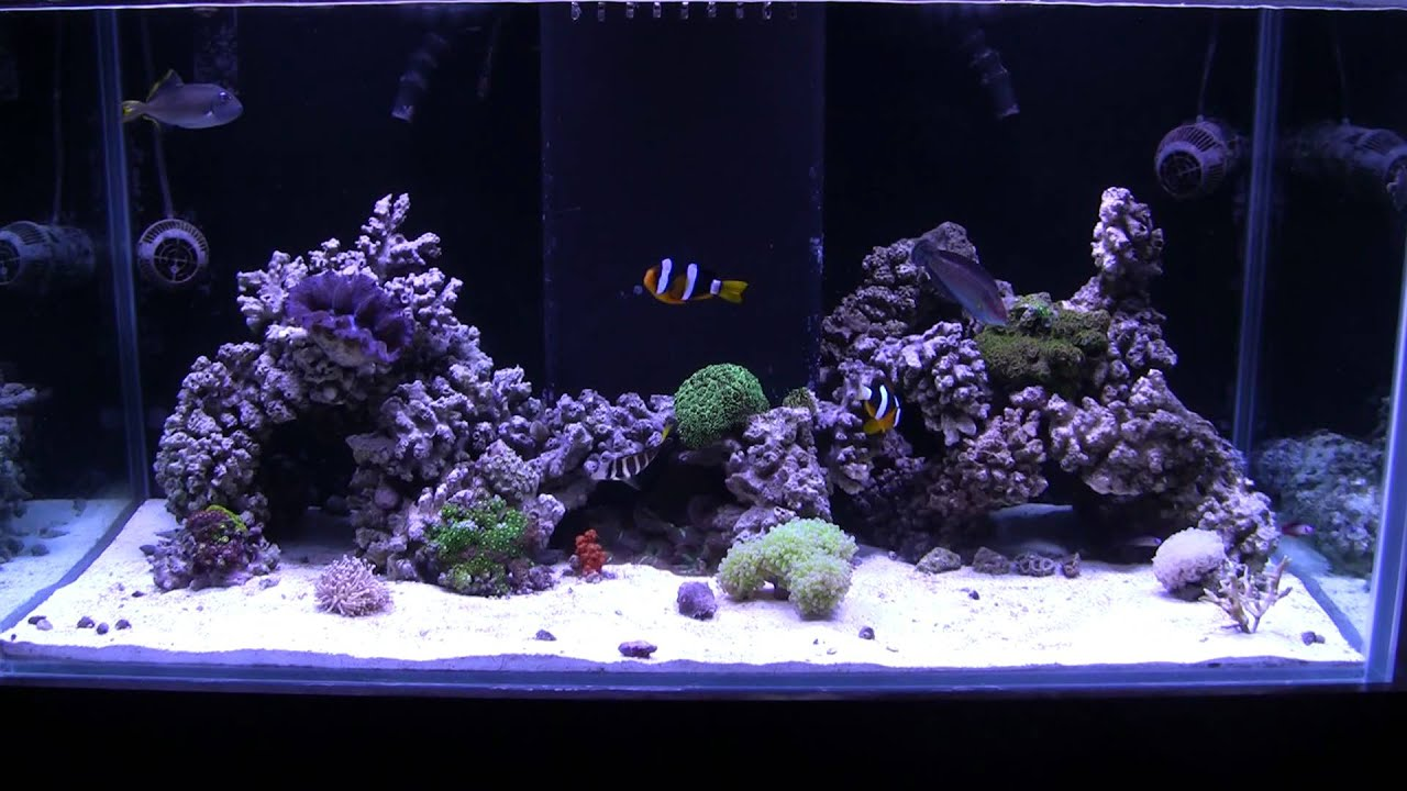 quick update new aquascape of the 120 reef - YouTube