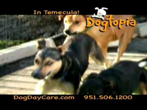 Dogtopia of Temecula Time Warner Commercial