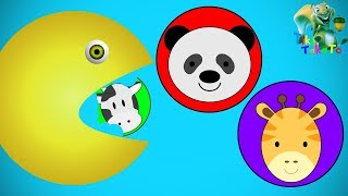 Learning Colours Animals Eating Pacman Hammer Xylophone Videos For Kids