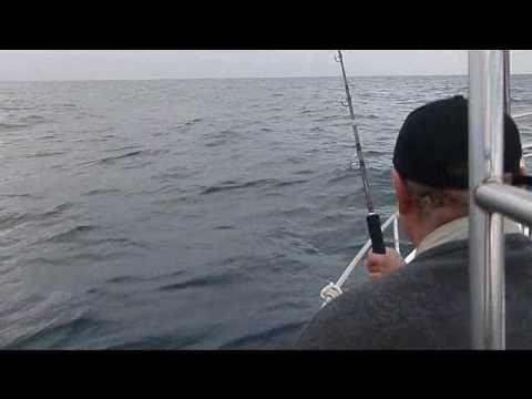 Pesca de la llampuga 10 kg 08 08 mins visto 20233 veces agregado