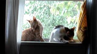 Reno n' Smiley Cleaning Each Other in the Window 2007