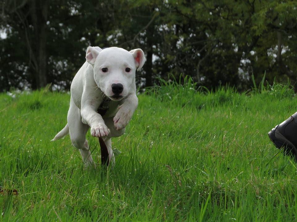 Residential Dog Training Staffordshire