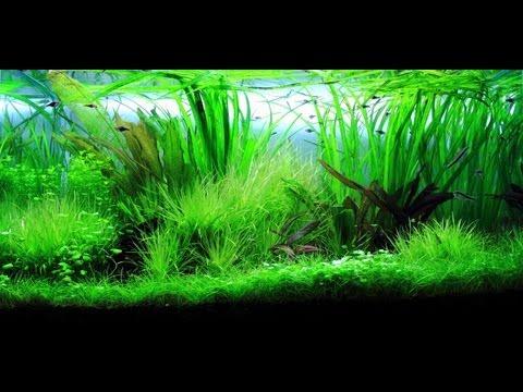 Freshwater Planted Aquarium - Wilderness