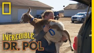 Two Seconds Too Many | The Incredible Dr. Pol