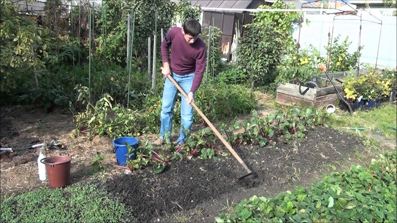 Когда осенью обрабатывать огород