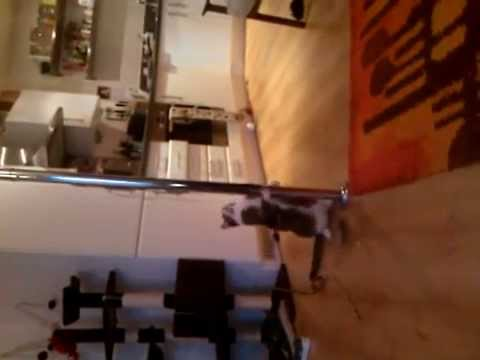 Pole Dancing Pussy
