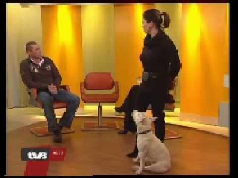 Talking Dog Armani und Hundetrainer Uwe Krüger bei TV Berlin