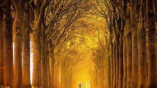 [Vivaldi - 6 Violin Sonatas, Op. 5 (FULL)] Video