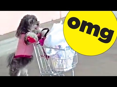 9 Dogs You Won't Believe Actually Exist video
