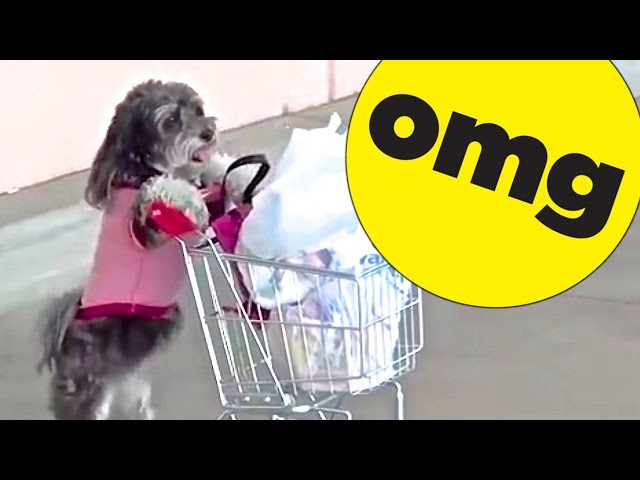 9 Dogs You Wont Believe Actually Exist