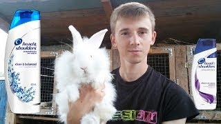 Плодятся как кролики + Head & Shoulder