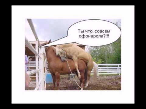 поручик ржевский и сиськи-ач1
