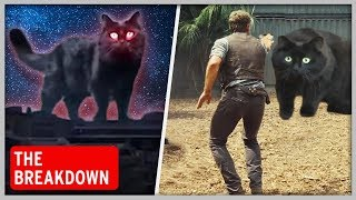 How OwlKitty the Cat Became a Hollywood Star | The Breakdown Ep. 1