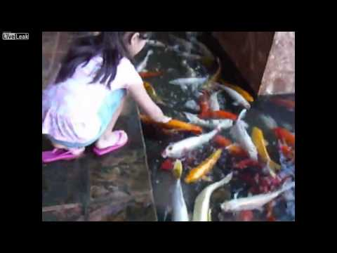 Feeding Koi Fish in Hawaii