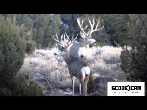 Tines Up Highlights Big Bucks & Shed Hunting