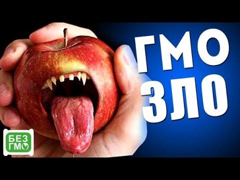 ГМО — ЗЛО?