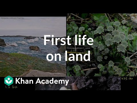 First living things on land clarification