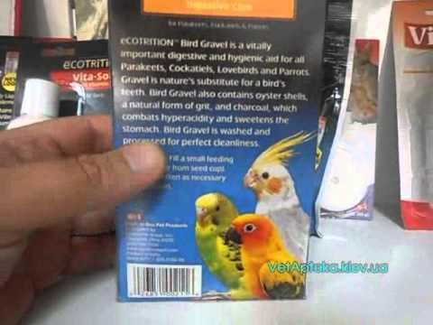 Как вылечить простуду у попугая в домашних условиях