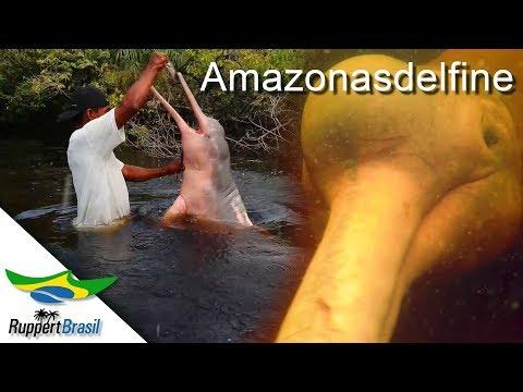 Impressionen der Amazonasdelfine