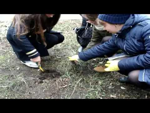 Schule 1222 Saubere Luft und Boden  ein Garant für Gesundheit