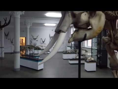 Muzeum Przyrodnicze We Wrocławiu