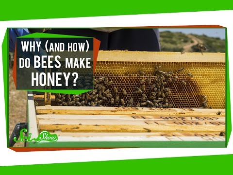 Why  And How  Do Bees Make Honey?