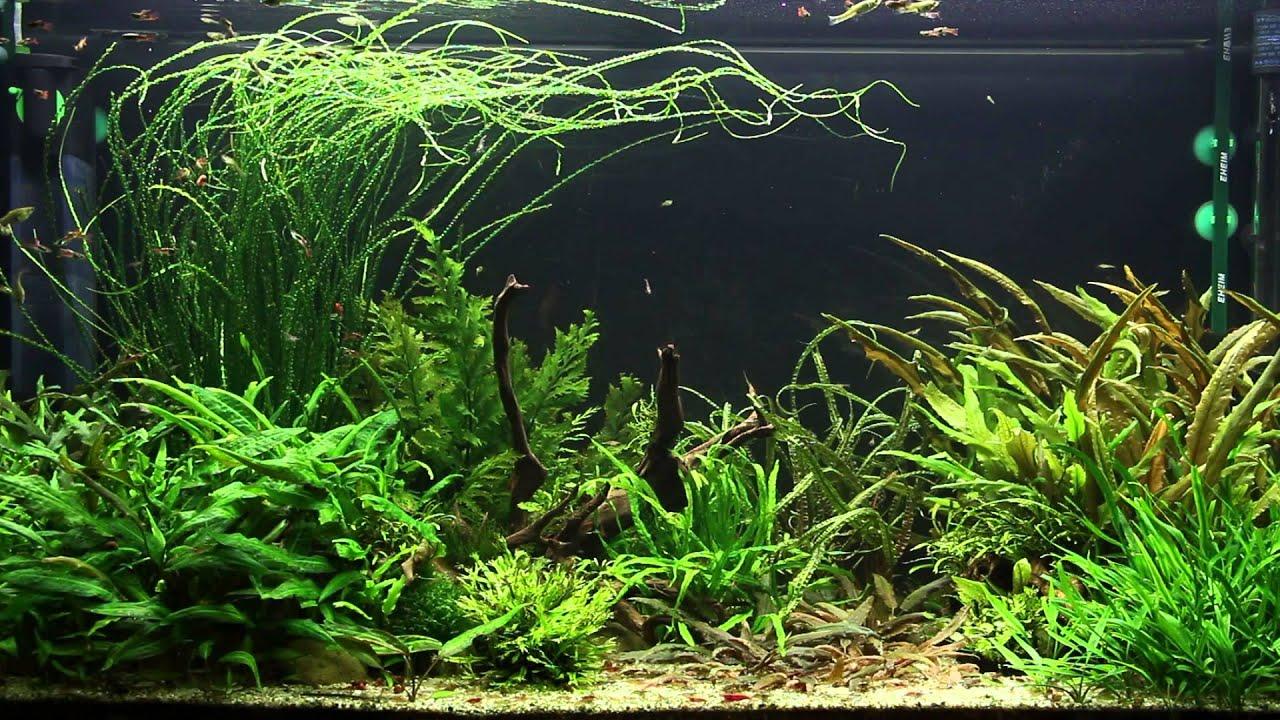 Repashy munity Plus Aquarium Co Op Aquarium Co Op Sindesc