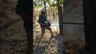 Đi chộm cây bi cưa vao chân