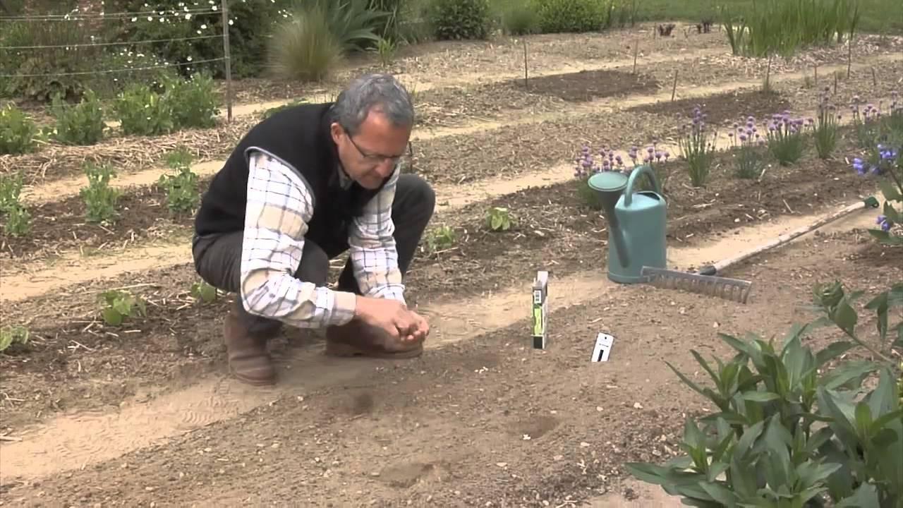 Semer ses haricots youtube - Comment planter les oignons ...
