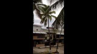 Number One the Best coconut tree trimmer in all Puerto Rico (músic)