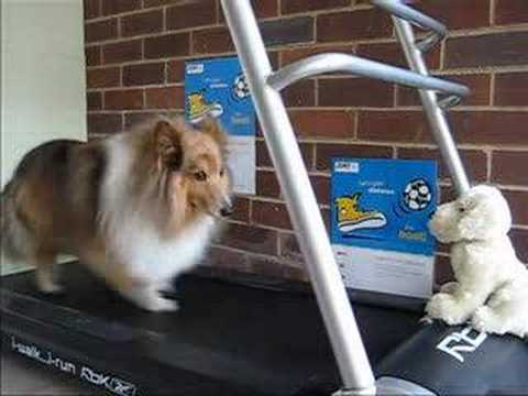 Sheltie (cocoa) on treadmill... running to another galaxy
