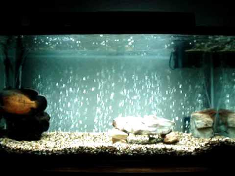 Compressor de ar aquario silencioso