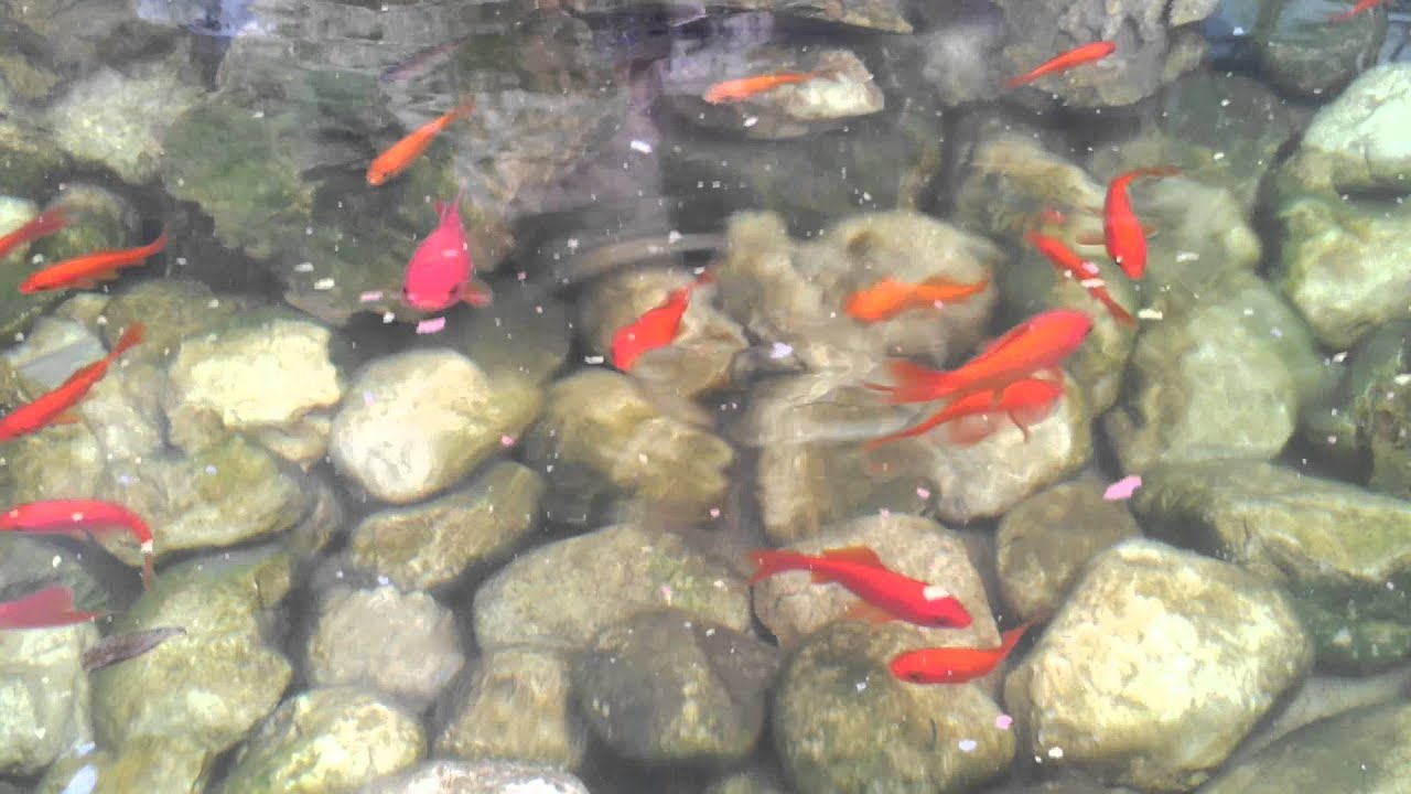Vasca per pesci da giardino vasche da esterno complementi for Vasca pesci giardino