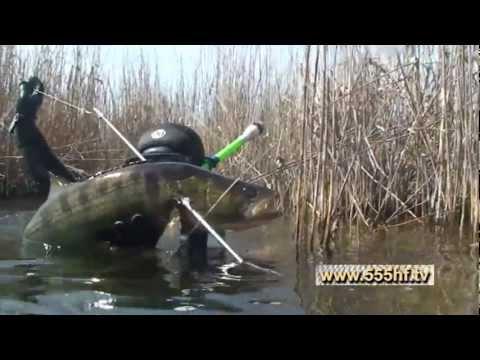 охота и рыбалка жлобин