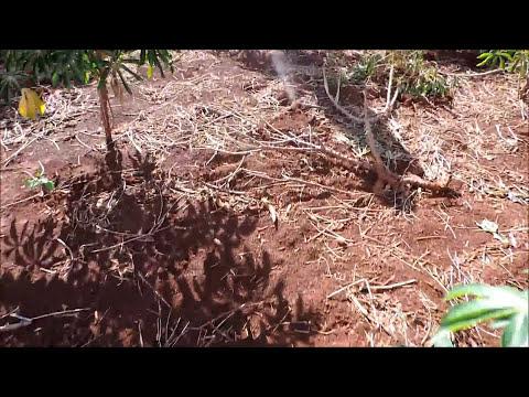 Caceria Menor con rifle aire comprimido 4.5