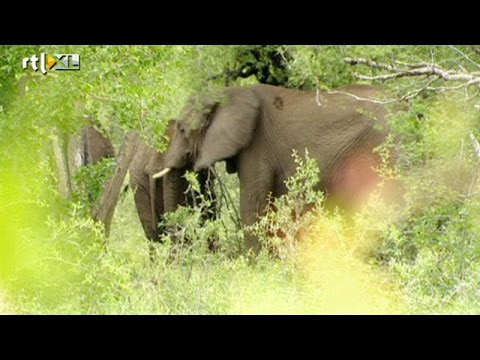 Op safari in Swaziland - RTL TRAVEL
